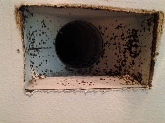 Mold In Ac Vents >> - Air Duct